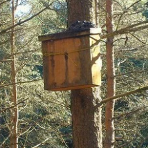 Den Box in Forest