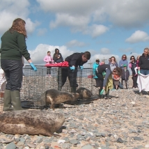 seal_release_seal_rescue_ireland