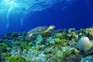 aquatic-ecosystem-and-living-organisms-11