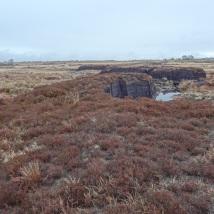 cutover-bog-high-bog-remnant-strip-2