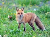 fox-7-390x285