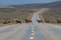 Man-Made Road Corridor